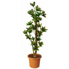 macranta-multistep-pianta-artificiale-h9305